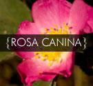 rosa canina oil